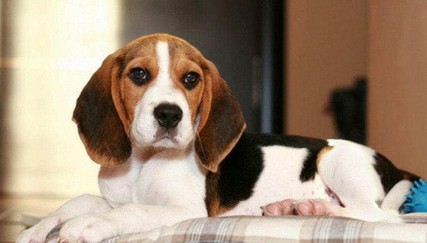 Ha un malore, il cane le salva la vita portandole il cellulare