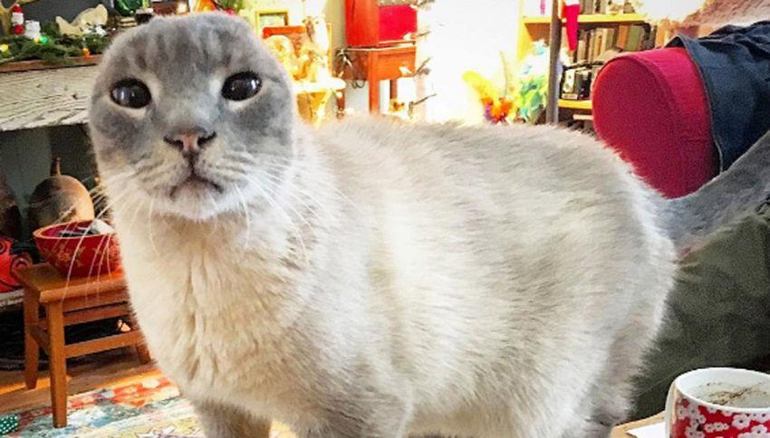 Il gatto senza orecchie ritrova la serenità. La storia di Eddie