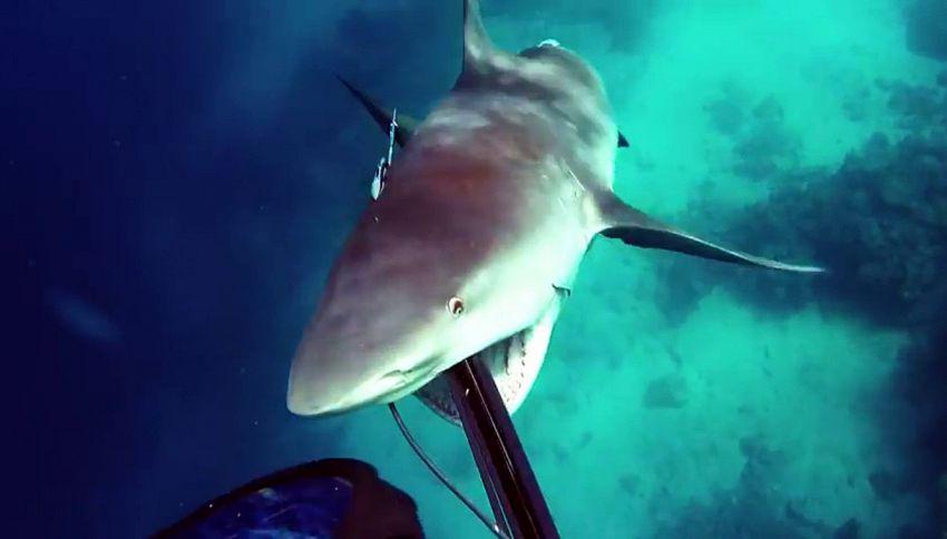 Lo squalo attacca il sub, che si difende e riprende tutto
