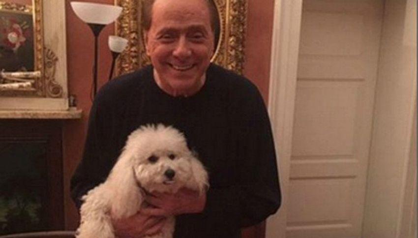 Non solo Dudù: sapevate che Berlusconi ora ha più di 20 cani?