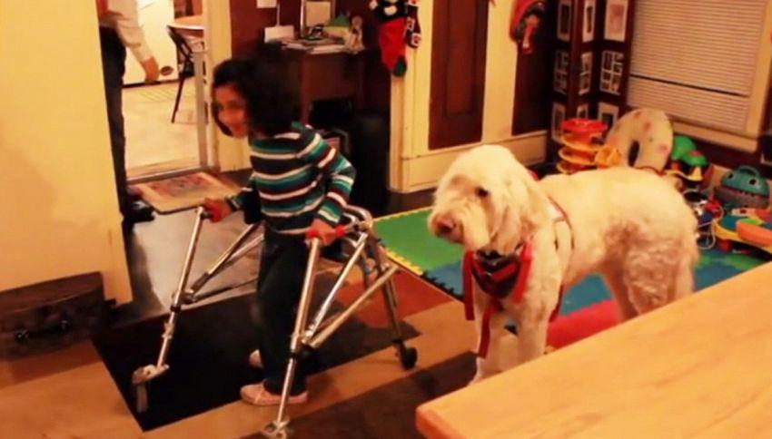 La bimba disabile e il cane: ora può portarlo a scuola