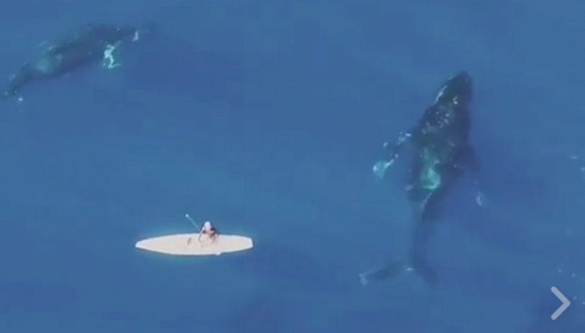 La magica danza delle balene intorno al surfista
