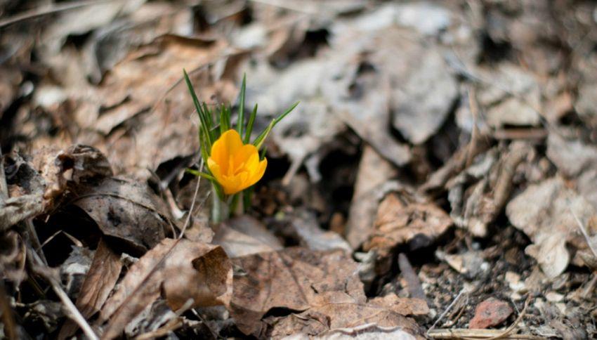 Cos'è l'equinozio di primavera e perché cade oggi