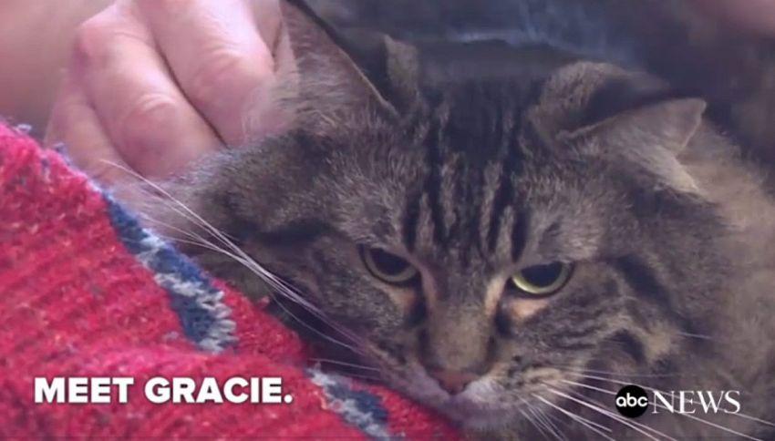 Grace, il gatto eroe che ha salvato la vita dei suoi padroni