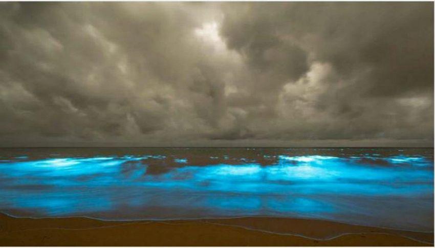 In Tasmania l'acqua risplende di notte e non è un buon segno