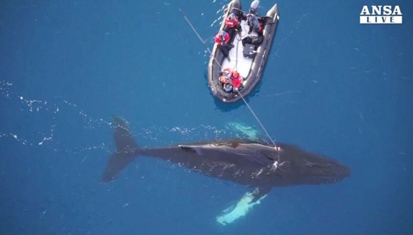 Il mare esplorato dalla balena. Immagini incredibili