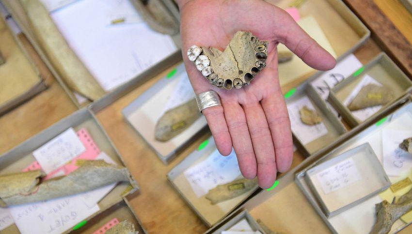Scoperta l'otturazione più antica: ha 13 mila anni