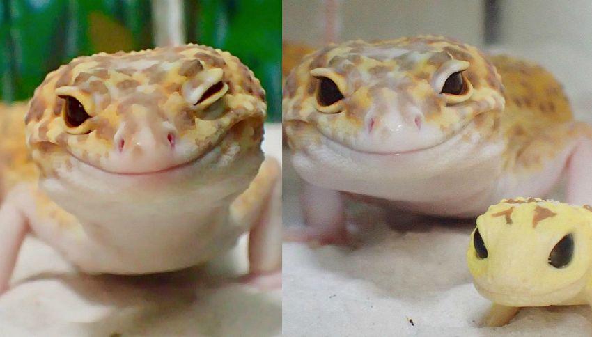 Giappone, contro lo stress c'è il geco sorridente