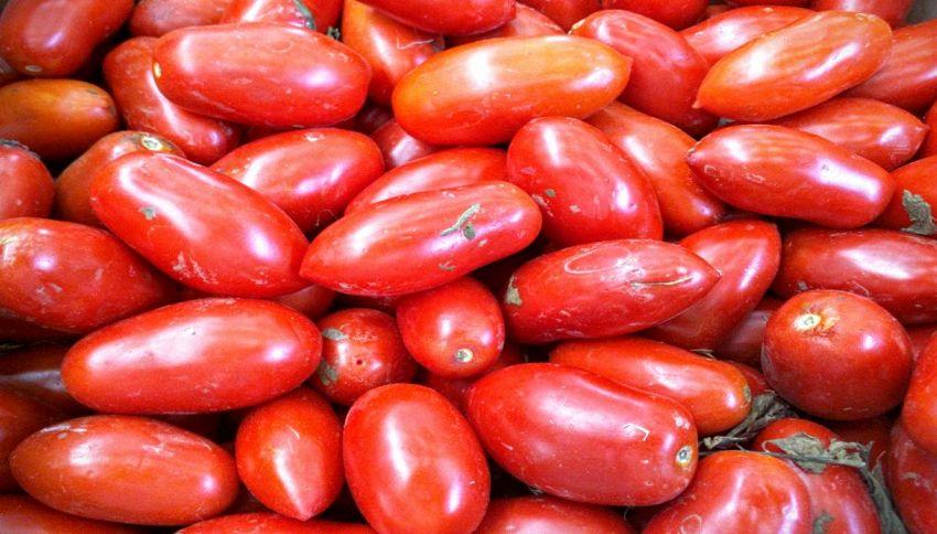 Pomodori del Sud 'alleati' nella lotta contro il cancro