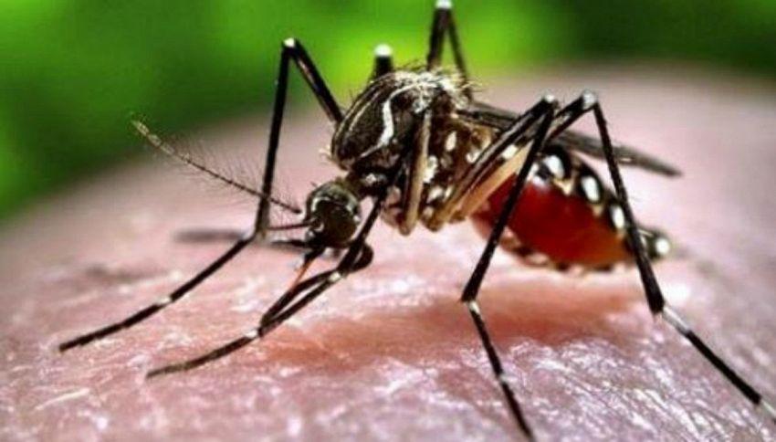 Quando iniziano a riprodursi le zanzare