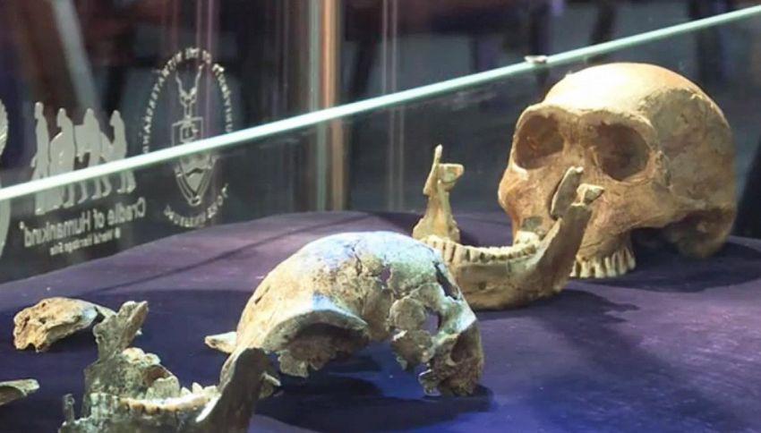 Ecco l'ominide che forse visse con i primi Homo sapiens