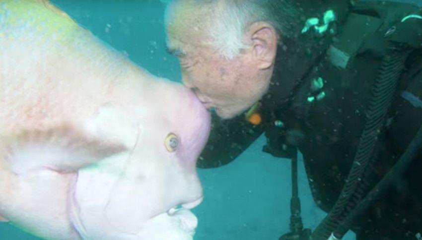 La #bellastoria del subacqueo che è diventato amico di un pesce