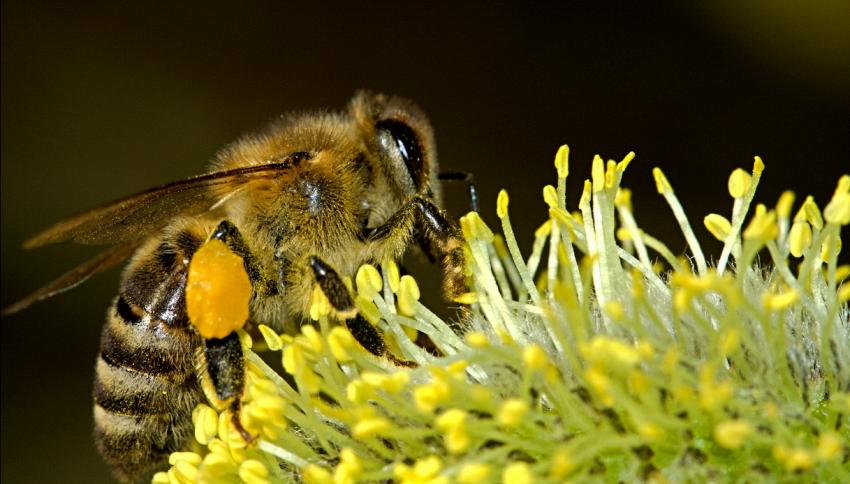 L'uomo che sussurra alle api