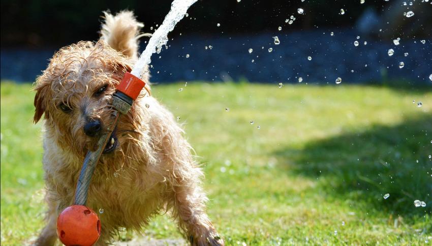 Come prendesi cura del cane quando fa caldo