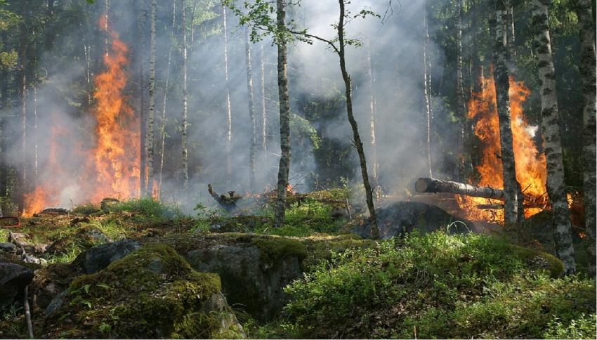 Come può scoppiare e svilupparsi un incendio boschivo