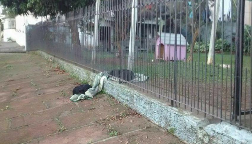 Cagnolina condivide la sua coperta con un cane randagio