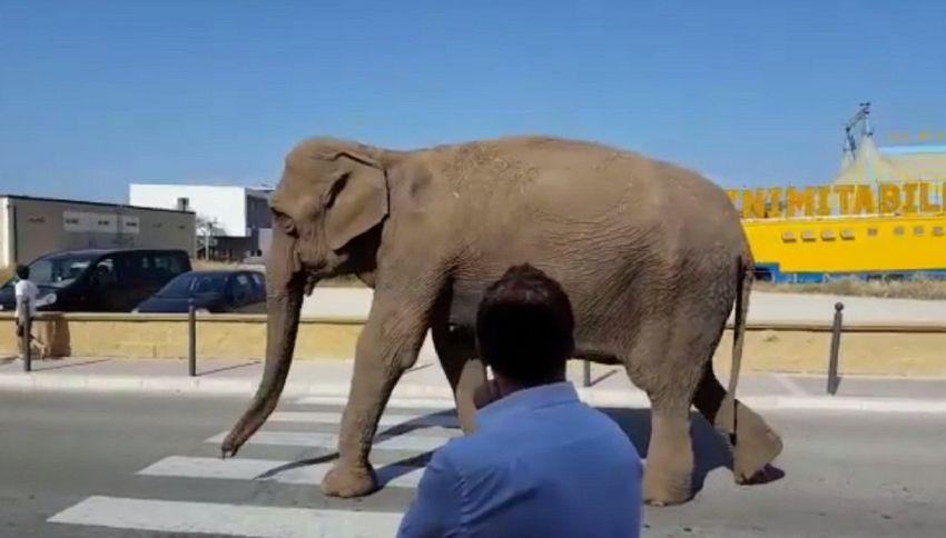 L'elefante scappa dal circo e fa un giro in città