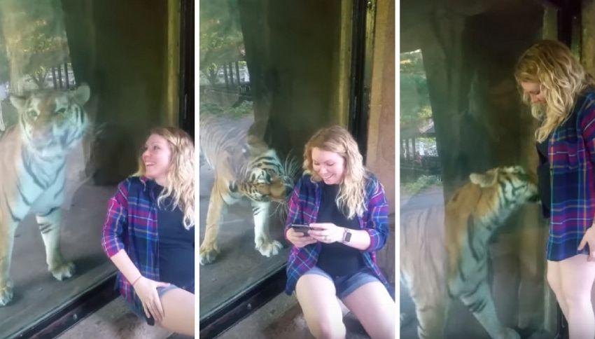 La donna è incinta, la reazione della tigre è commovente