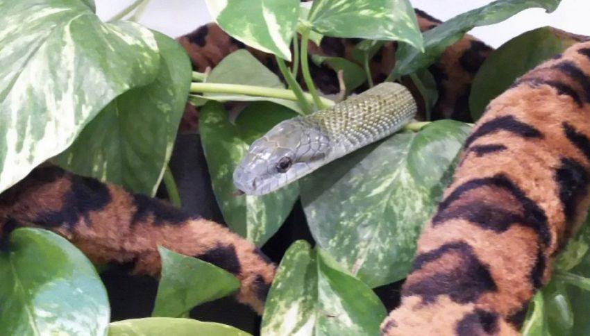 A Tokyo è stato aperto il primo snake café