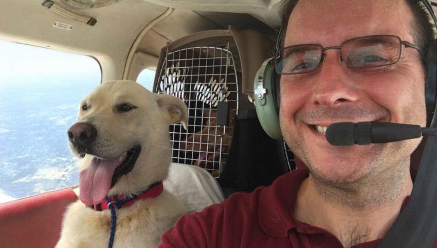 La storia di Paul, compra un aereo per salvare i cani randagi