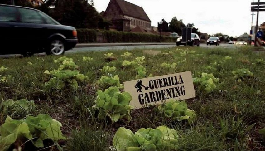 Guerrilla-gardeners: la rivoluzione a base di fiori nell'asfalto