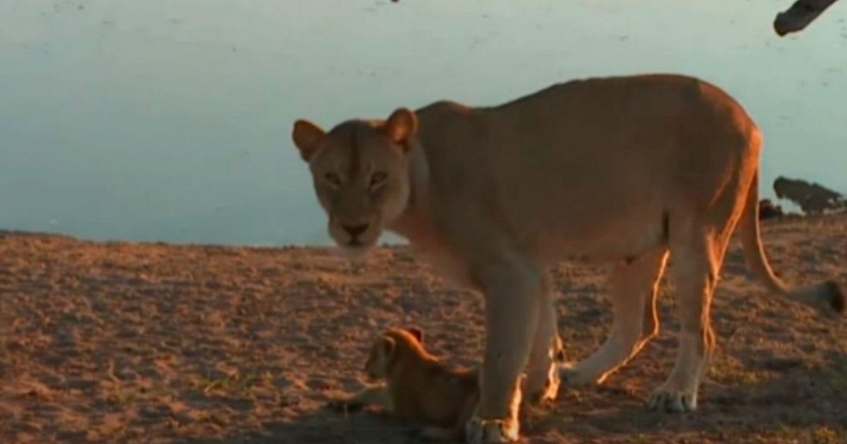 Mamma leonessa alle prese con il cucciolo che vuole fare - In bagno con mamma ...