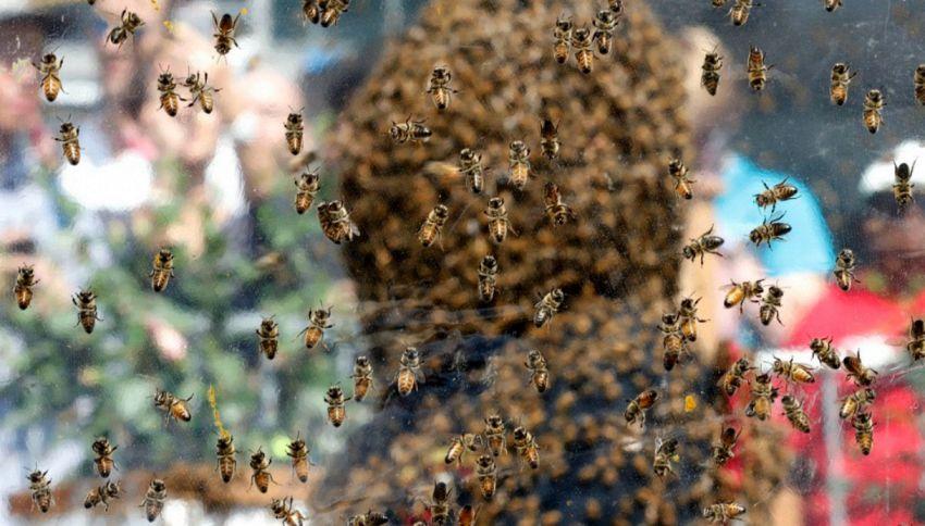 100mila api sul viso per un'ora: il record in Canada