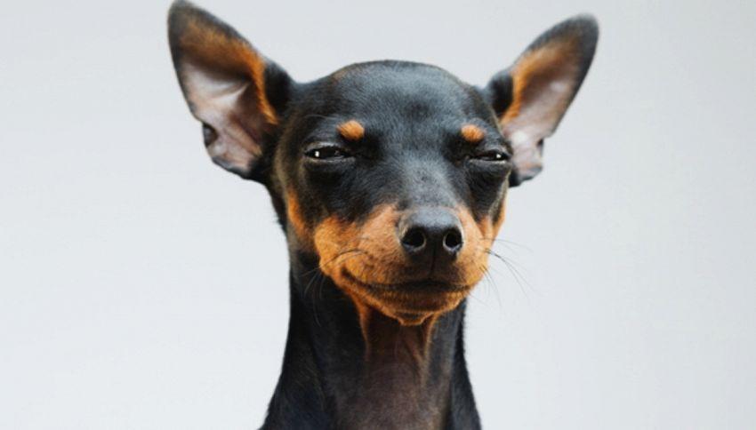I cani comunicano con le espressioni. Lo dice la scienza
