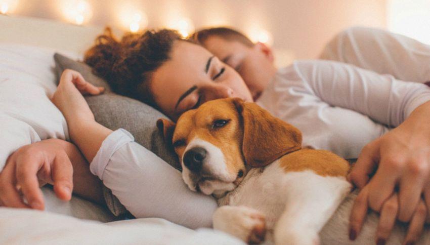 Se hai un cane ti ammali di meno. Lo dice la scienza