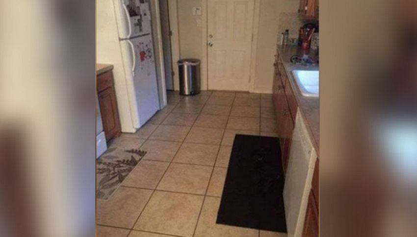 Riuscite a trovare il cane nella foto? Il test