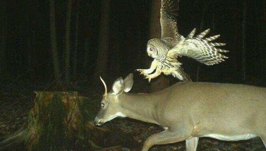 Cosa fanno gli animali di notte, quando nessuno li vede