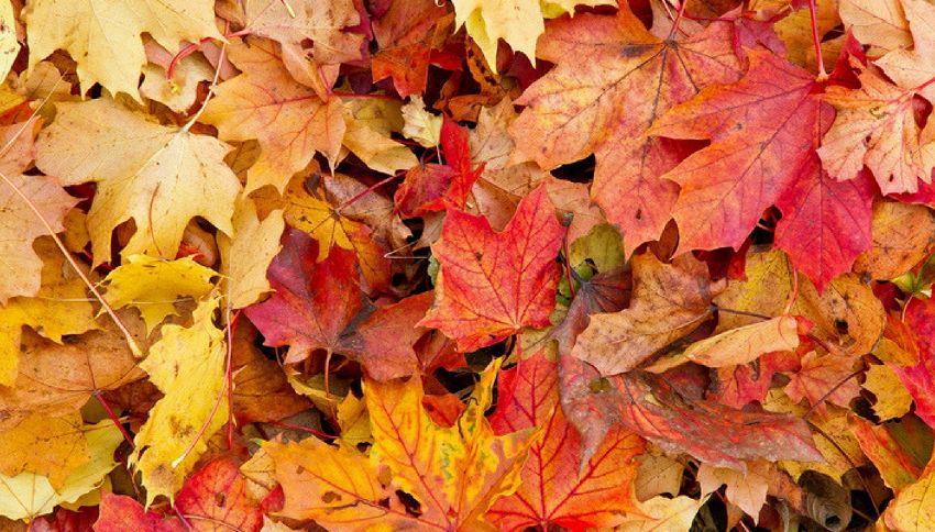 Perché le foglie cambiano colore in autunno?