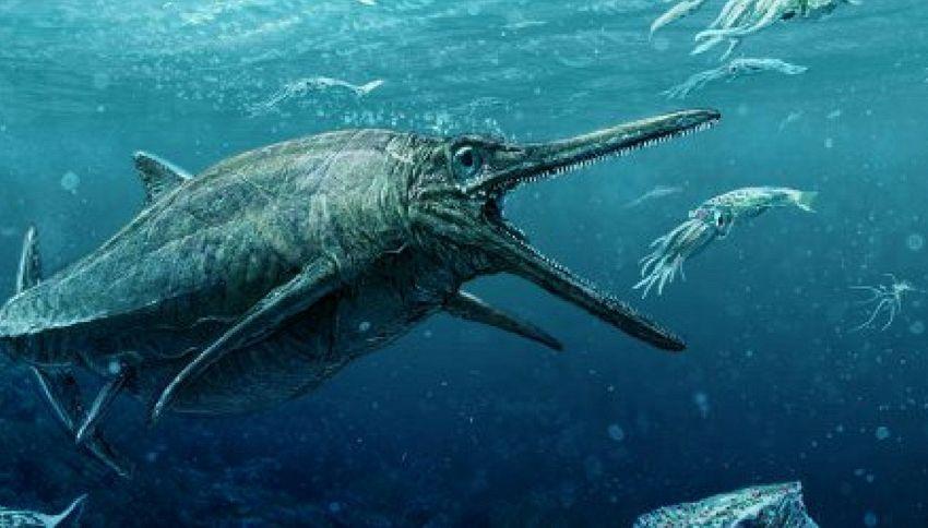 Scoperta in un fossile dimenticato nuova specie di ittiosauro