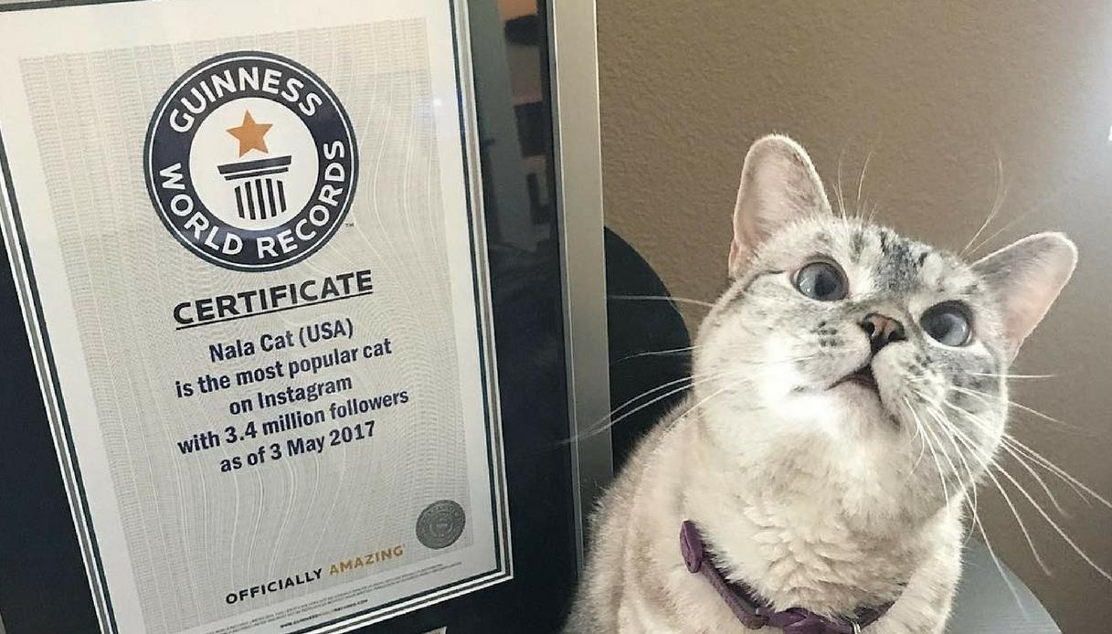 Nala, il gatto più popolare di Instagram entrato nel Guinness