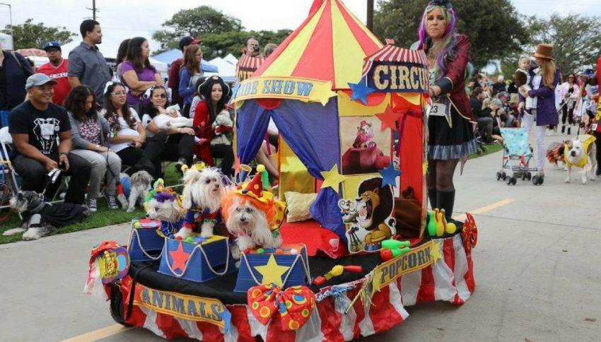 A Los Angeles la festa di Halloween per cani più folle di sempre