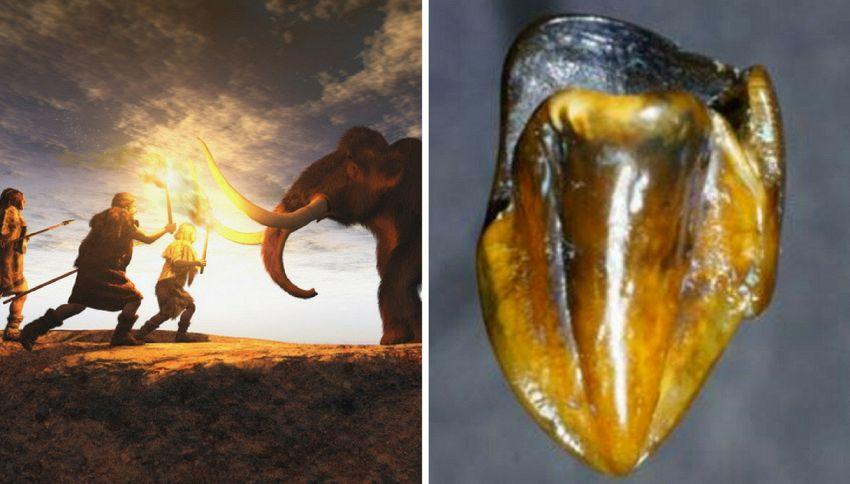 Dente di 9 milioni di anni fa riscrive la storia dell'umanità