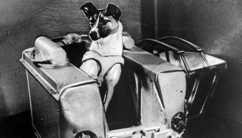 60 anni fa la cagnetta Laika partiva per lo spazio