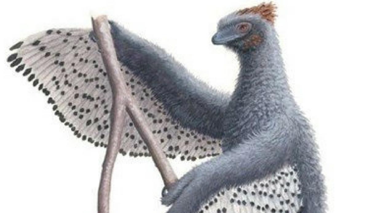 Ecco il dinosauro piumato che era morbido come un peluche