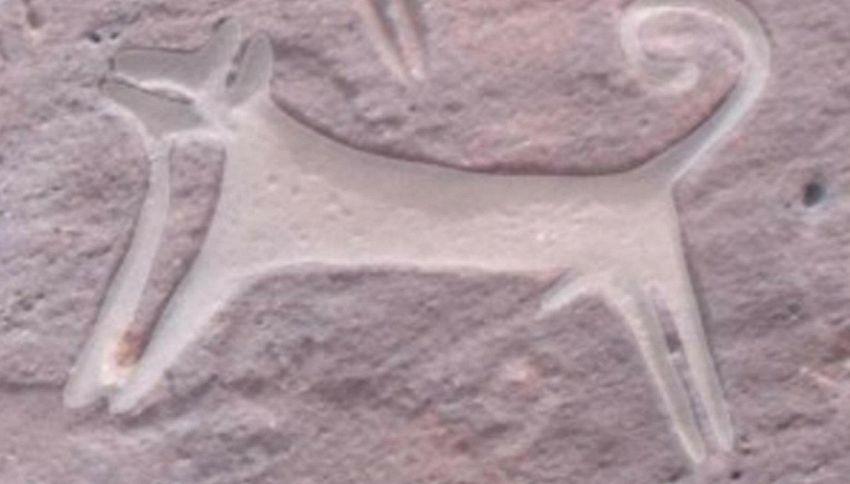 Trovato il ritratto più antico di un cane. Risale a 8mila anni fa