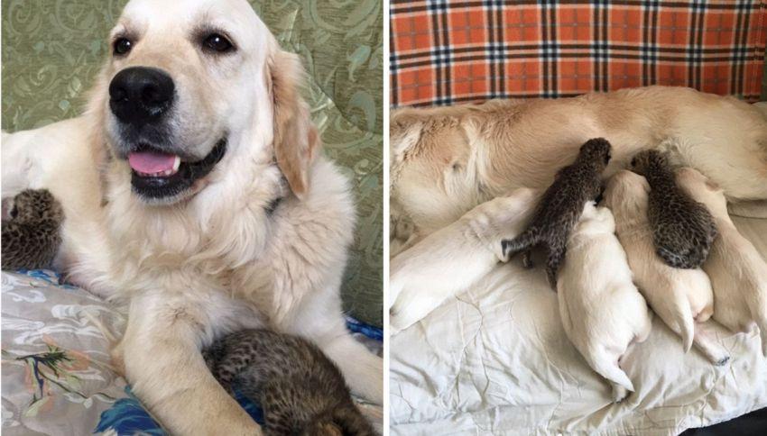 Tessie, il cane che ha adottato due cuccioli di leopardo