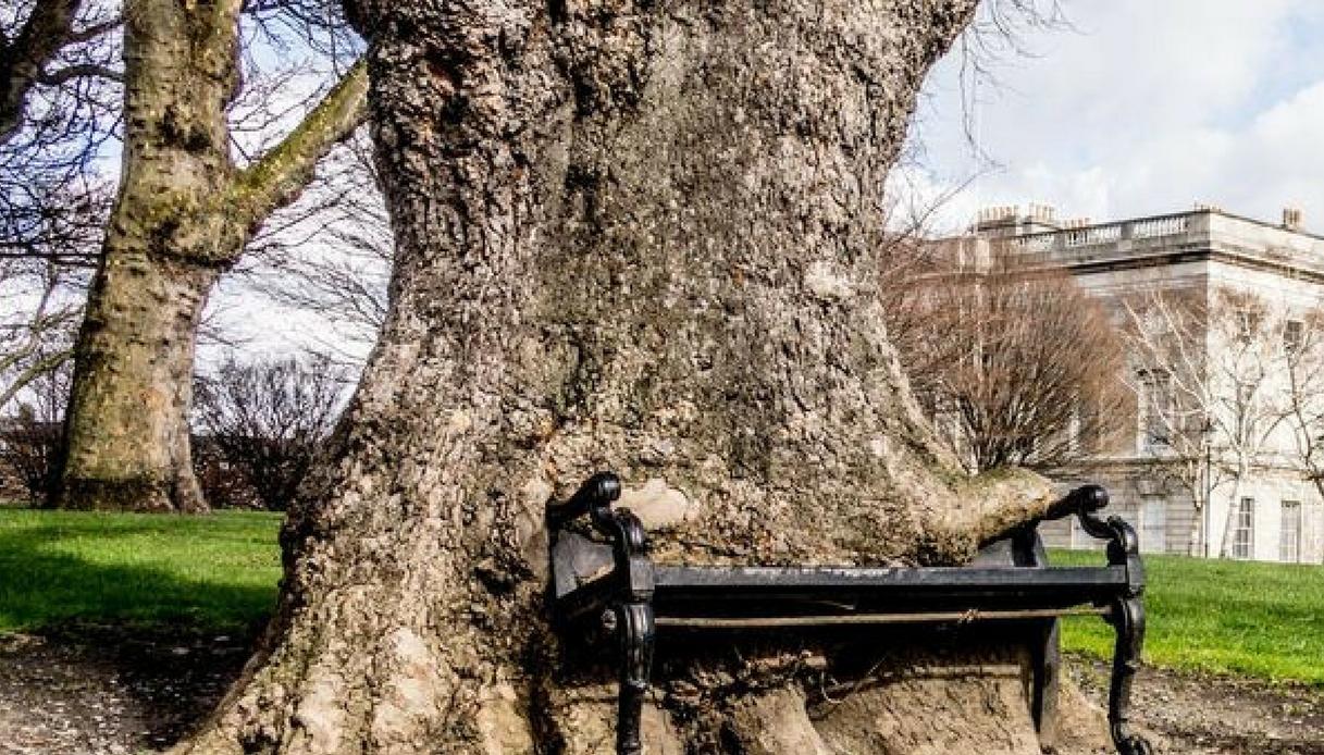 The Hungry Tree, l'albero che si è mangiato una panchina