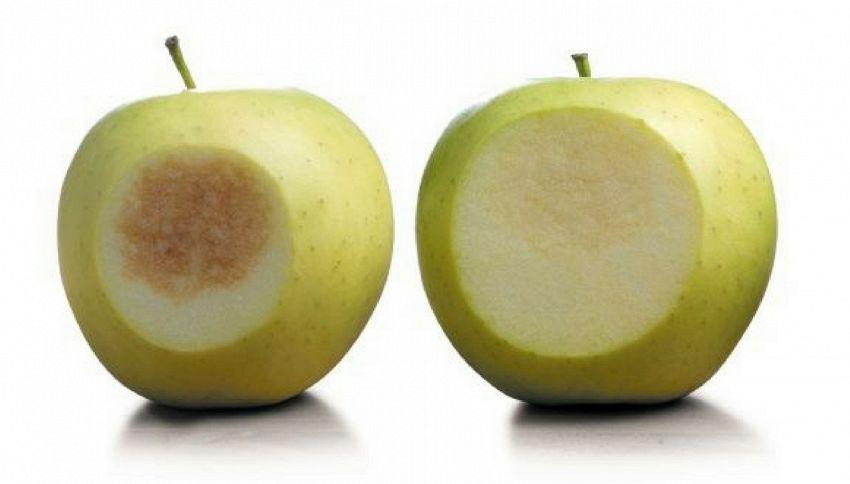 Arriva la mela artica, si vende a spicchi e non diventa nera