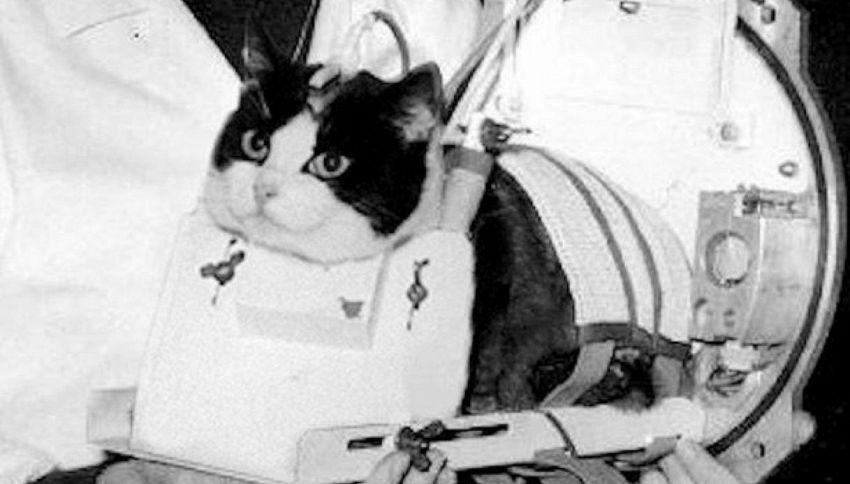 La storia di Felicette, primo gatto nello spazio