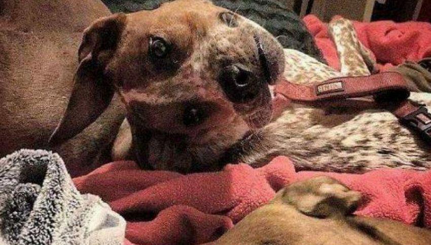 L'illusione ottica del cane che vi farà impazzire