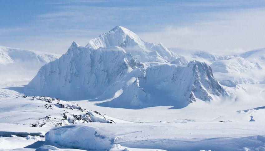Il Polo Sud era una foresta 260 milioni di anni fa. La scoperta