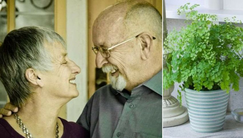 Innaffia per anni le piante di plastica della moglie morta