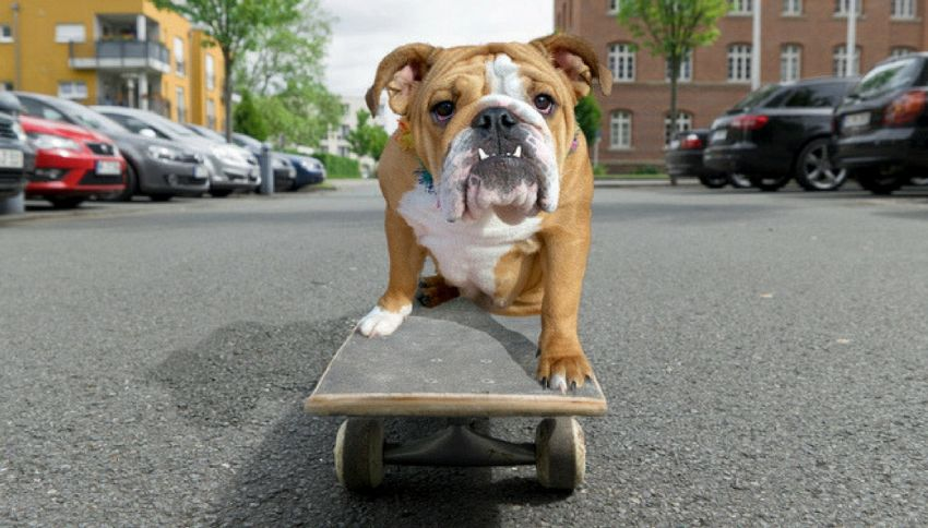 L'incredibile cane che si allena sullo skateboard