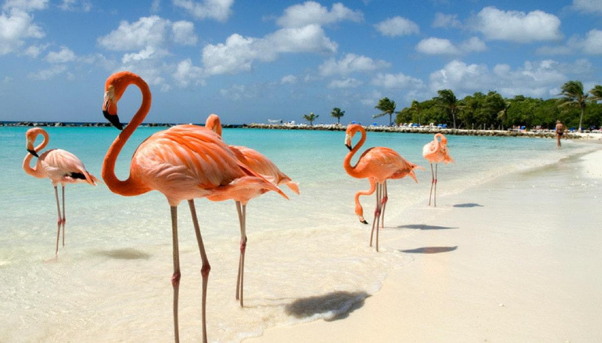 Cercasi direttore di fenicotteri. Il lavoro da sogno alle Bahamas