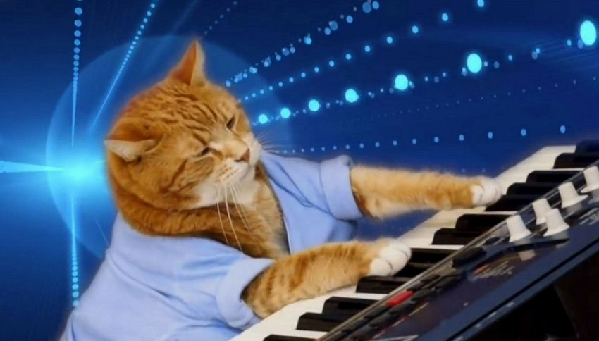 Addio Bento, il web saluta l'amato Keyboard Cat