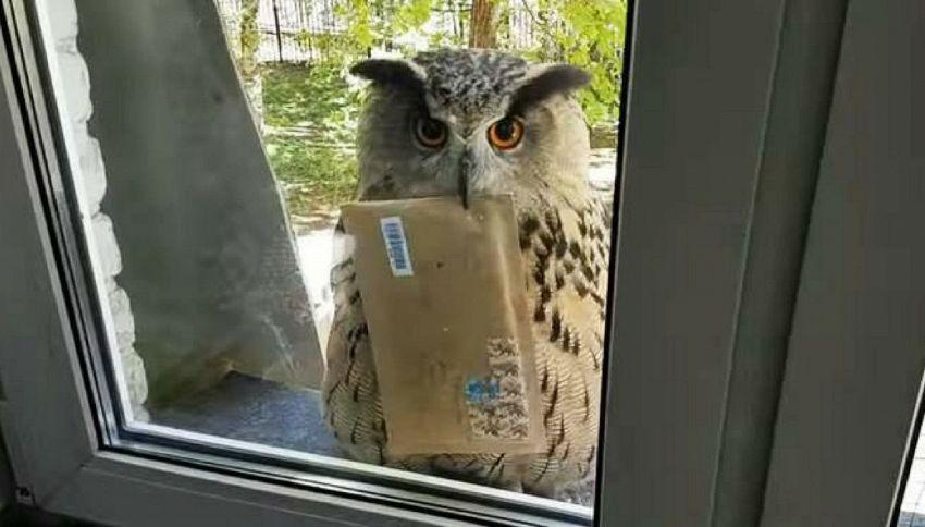 In Russia la posta la consegna un gufo